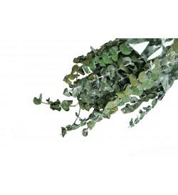 Kurutulmuş Okaliptus Demeti