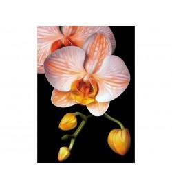 Collection D'art Elmas Nakışı Taş Yapıştırma Zarif Orkide DE281